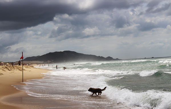 A dog on a beach in Florianopolis, Brazil