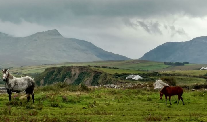 Horses in an Irish field