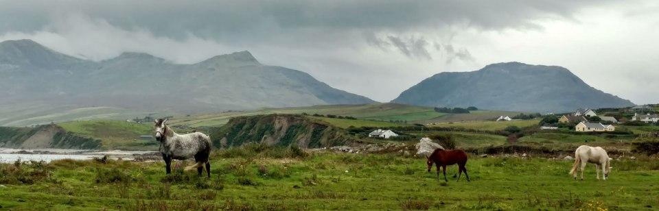 Horses in an Irish field